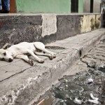 Awww, cute sleepy stray dog in Granada having a nap. Don't you just love dogs?