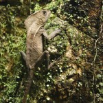 This lizard was a professional model. No matter how close you got with your camera it wouldn't move a bit